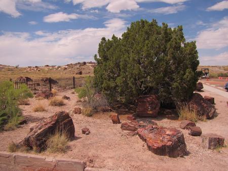 mineralization: Pieces of petrified wood in Arizona desert.