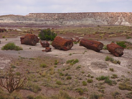 Petrified log in Arizona desert. Stock Photo