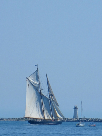 Famous Bluenose sailing schooner under sail in Halifax harbor with the McNabs Island lighthouse in the background. Editorial