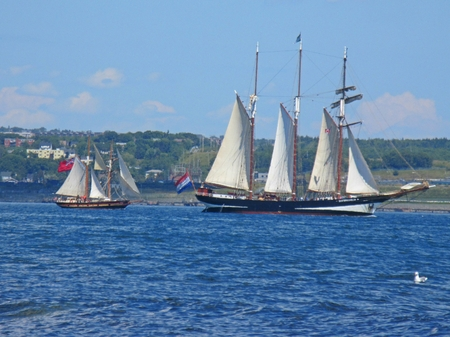 Small sailing vessel following large sailing ship in Halifax Harbor during the tall ships festival.