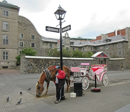 Hansom Cab in Old Montreal.