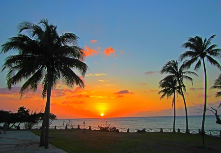 Large format beautiful tropical sunset photograph with palm trees and ocean.