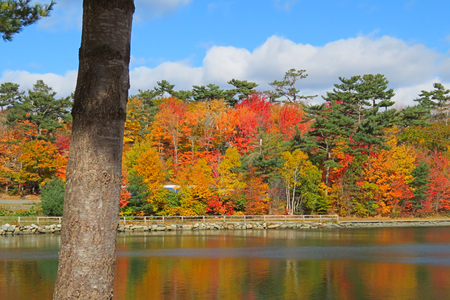 Beautiful fall colors in Halifax Nova Scotia reflected in the water.