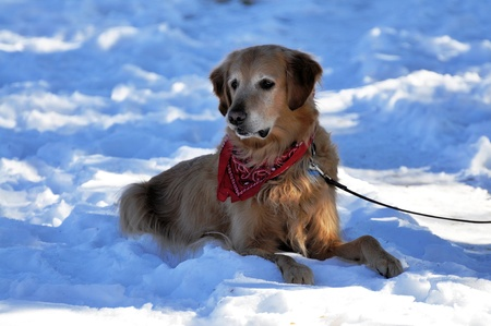 behave: Attentive Dog in Snow Stock Photo