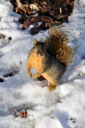 Squirrel Begging for Food Stock Photo - 12751477