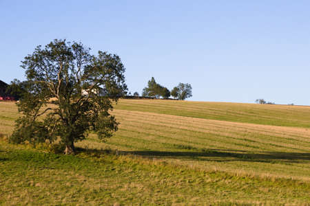 A tree in a field near Wold Newton in the Lincolnshire Wolds Stock Photo