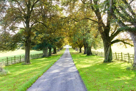 Tree-lined country track with shadows being cast by the trees