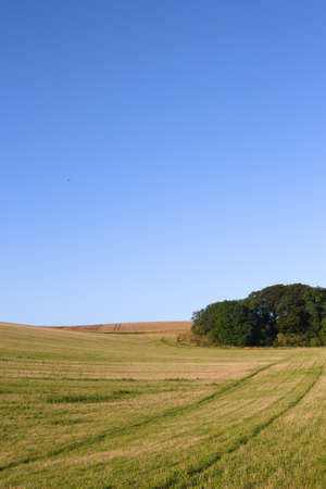 A grassy field with a small copse in the corner near Wold Newton in the Lincolnshire Wolds