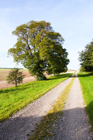 Country track lined with grass and trees with a blue sky