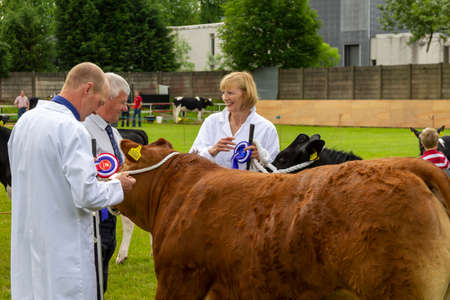 East Kilbride, South Lanarkshire, Scotland, UK - June 14, 2014: June Hamilton from Chapelton and Bob Ferguson from Strathaven receive their rosettes from a judge at the East Kilbride Open Cattle show. Editorial