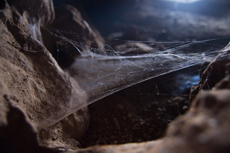 Spider web in dark cave between rocks
