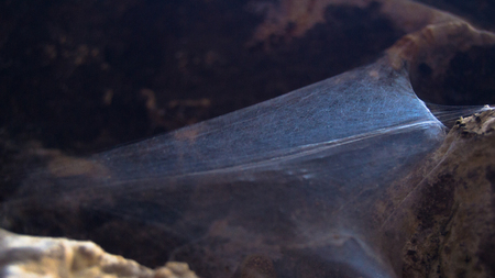 Smokey spider web  on rocks