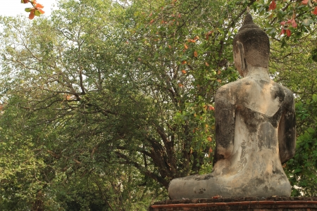 ayothaya: buddha back