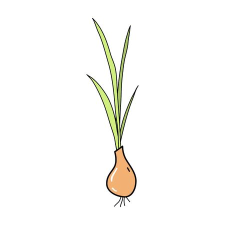 Cute onion pattern in doodle style, healthy food and natural food. 向量圖像