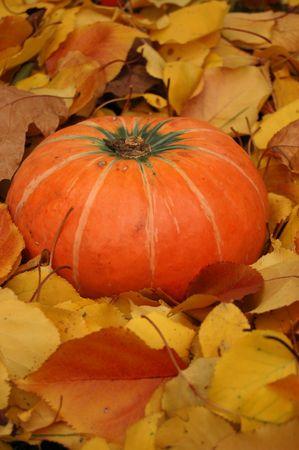 Autumn pumpkin Stock Photo - 2083905