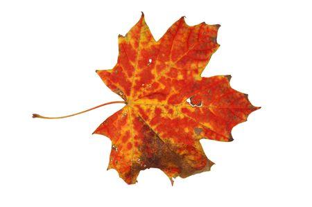 Autumn leaf isolated. More autumn photos in my portfolio. photo