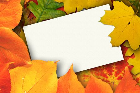 Blank card surrounded by beautiful autumn leaves photo