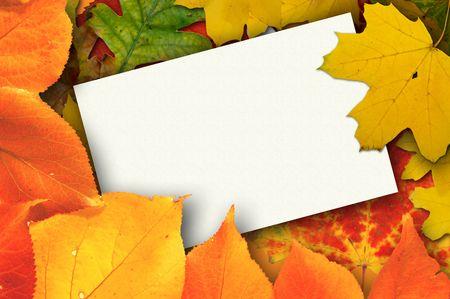 caes: Tarjeta en blanco rodeada por las hojas hermosas del oto�o