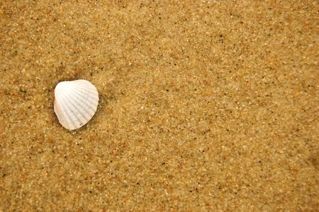 Sea shell on the sandy beach. Vacation concept