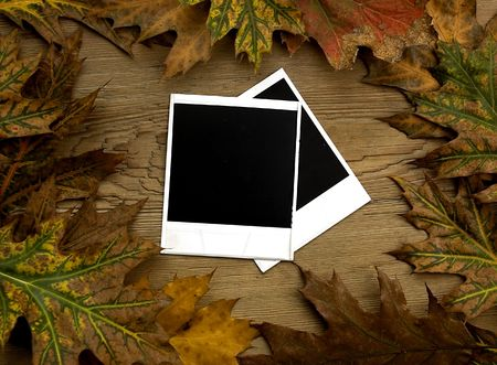 Blank photograph frames over autumn background Stock Photo - 3711168