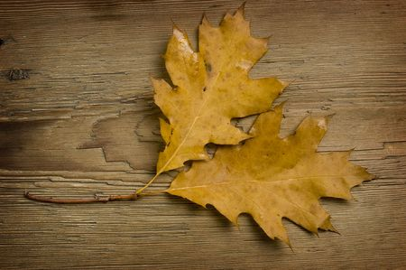 two autumn leaves over old knaggy board. photo