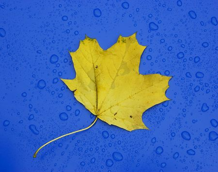 Single autumn leaf over blue metalic surface. photo