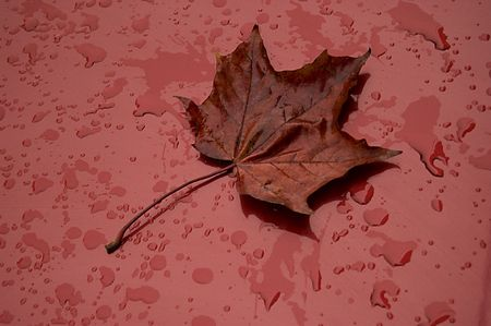 Single autumn leaf over red metalic surface. photo