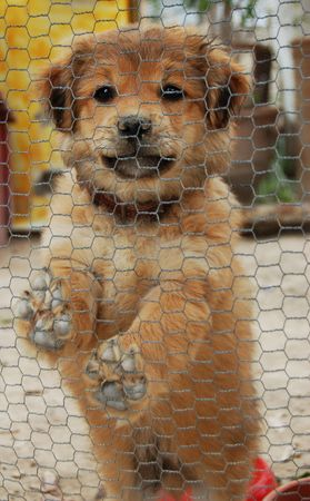 Little cute dog in a cage
