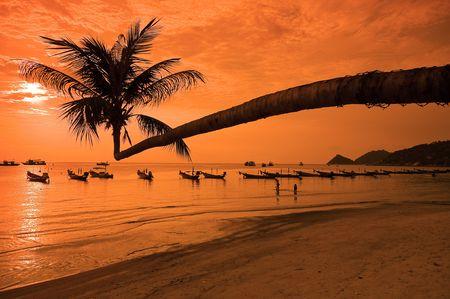 koś: Sunset with palm and longtail boats on tropical beach. Ko Tao island, Thailand