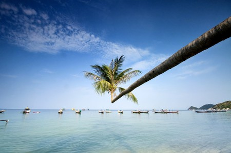 palm and longtail boats on tropical beach. Ko Tao island, Thailand
