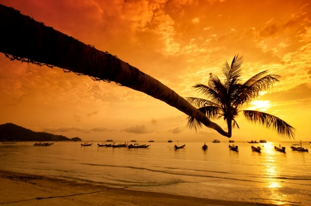 Sunset with palm and longtail boats on tropical beach. Ko Tao island, Thailand photo