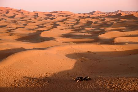 erg: Camels at the sand dunes in the Sahara Desert, Erg Chebbi, Merzouga, Morocco