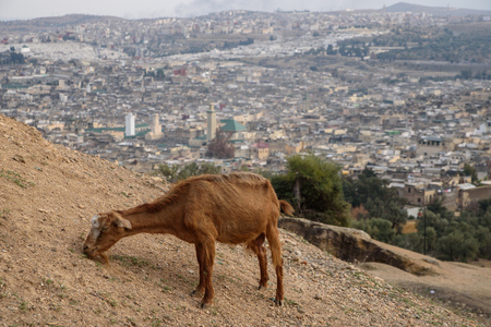 fes: View of the old town of Fez, Morocco, North Africa