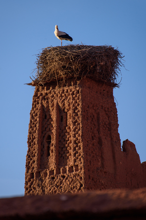 Stork on the old kasbah tower in the Atlas Mountains of Morocco. Editorial