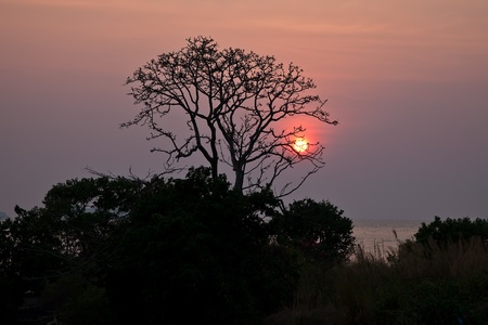Beautiful Sunset in Thailand with the Lone Tree