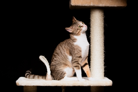 Domestic cat on a cat tree