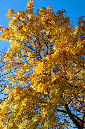 Tree during the autumn time, sunny weather. photo