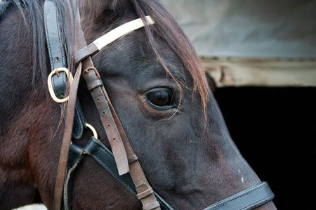 Detail of a beautiful horse, picture taken during the daytime. photo