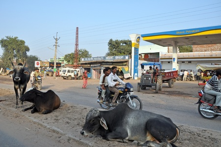 kockázatos: MADURAI, INDIA - 1 NOVEMBER, 2009: Picture of typical Indian village street with cows and overloaded  motorbikes on November 1, 2009. Driving of vehicles is risky in India due to holy cows moving everywhere. Sajtókép