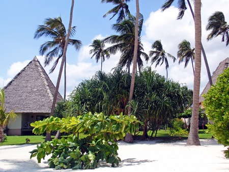 A beach resort on a palm-fringed beach in Zanzibar. Stock Photo - 8964700