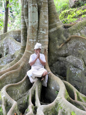 tree position: JIMBARAN, BALI - 6 JULY, 2009: Monk sit on a tree with hands in the position of regards on July, 6. Balinese people have been Hindus for eight hundred years.