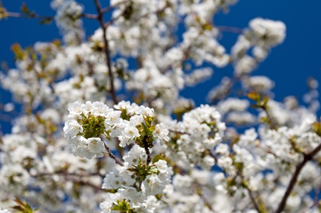 Tree during the spring time, sunny weather. Stock Photo - 9584473
