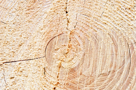 Detail view of the circles typical of wood. photo