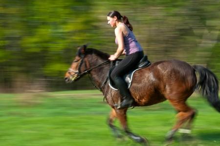cavallo che salta: Bella ragazza e cavallo baio durante la giornata di sole, tecnica panning. Archivio Fotografico