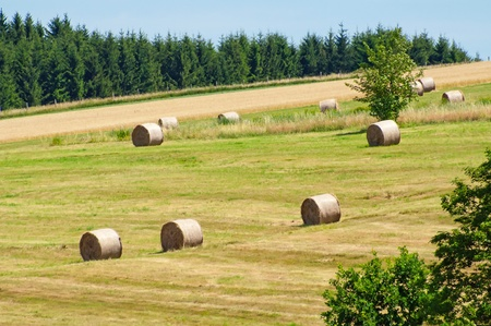 bale: View of summer field with straw bales.