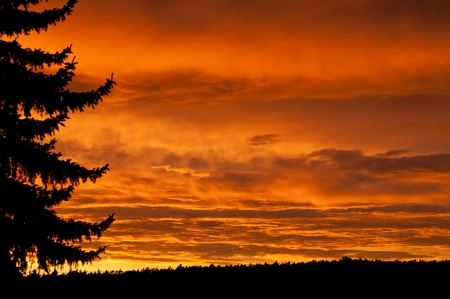 nighttime: Beautiful sunset with a tree silhouette and forest on the background. Stock Photo
