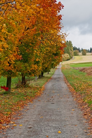 Trees at the road during the autumn time. photo