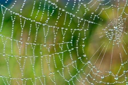 appears: After the rain, the hidden beauty of this cobweb appears.