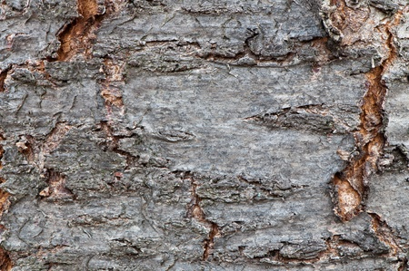 detailed view: Detailed view of a tree bark usable as a background.