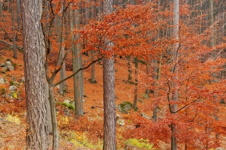 Beautiful autumn forest scenery during the daytime. photo